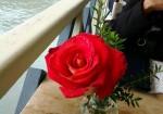2012-09-11 rosa nautica